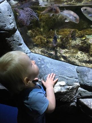 bebe aquarium la rochelle